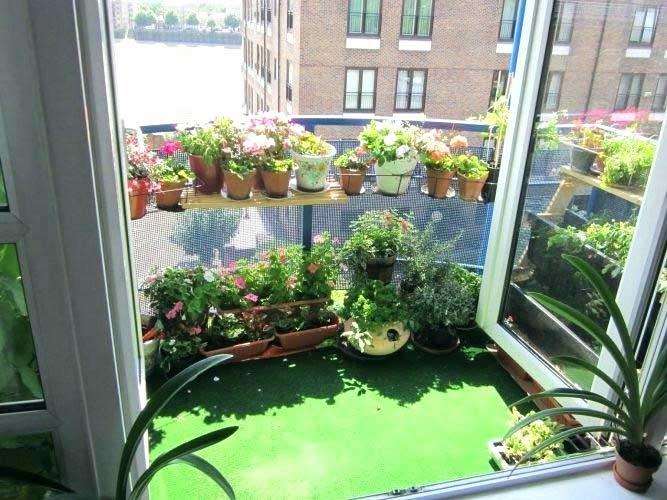 گل ها و گیاهان مناسب برای تراس و بالکن